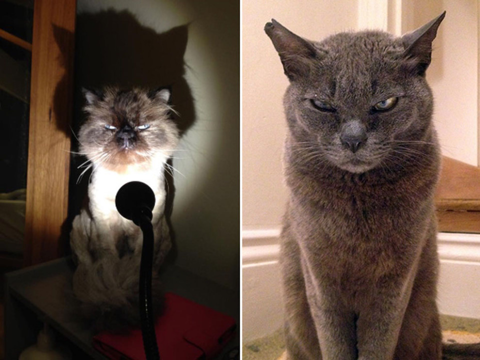A hilarious gallery of angry, pissed off cats has appeared on the Internet.